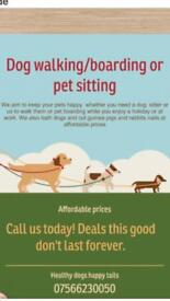 Dog walking and dog/animal boarding