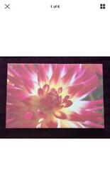 Pink and Yellow Floral Canvas Print