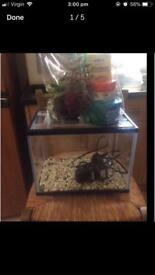 12 litre fish tank aquarium with all accessories and cleaning equipment