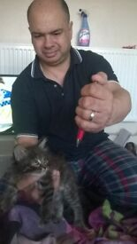 BEAUTIFUL FLUFFY 8 WEEK OLD KITTEN ,SITS IN THE PALM Of your HAND. FLEADED AND WORMED 18TH APRIL