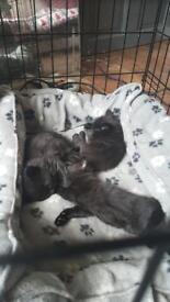 3 kittens- 1 boy an 2 girls