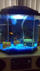 Fish tank 25L