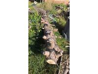 FREE Wood - Main trunk of a felled Pine Tree - Collection only