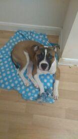 8 month old puppy