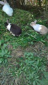 Adorable Rabbits for Sale