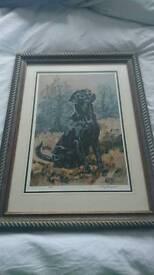 Vic Granger black Labrador