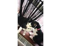 VERY BEAUTIFUL KITTENS FOR SALE