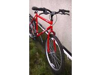 Red bicycle, Adult male. It has 18 gears, Sabre Serpent