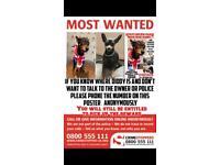 🛑STOLEN DOG 🛑 11k reward!!!