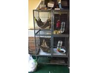 2 Male Ferrets plus cage £250.00 no offers