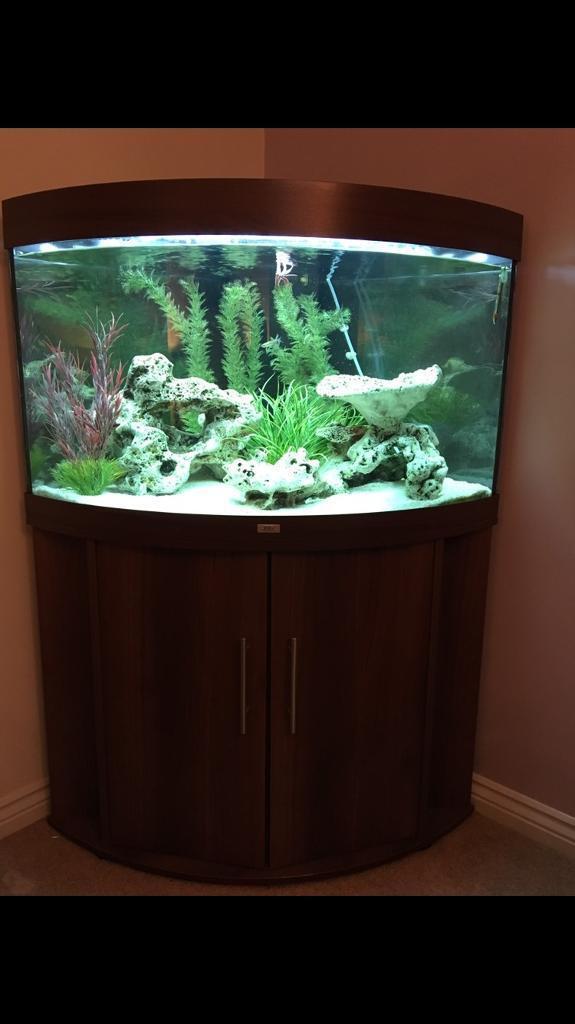 Juwel Trigon 190 Fish tank