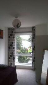 Sunny room in Vegan flatshare.