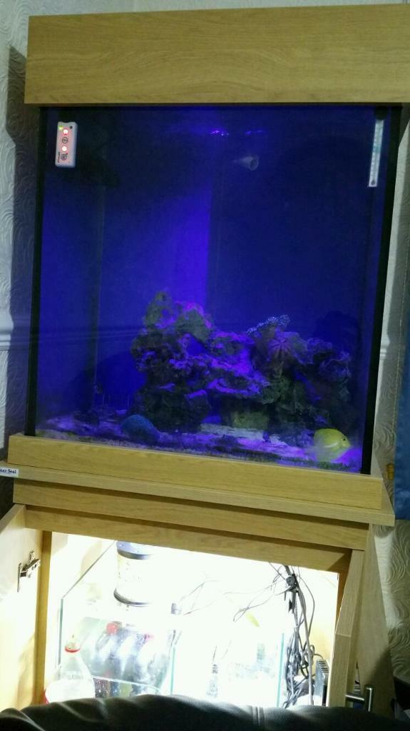 Clearseal 60 gallon cube reef tank in leicester for 60 gallon fish tank