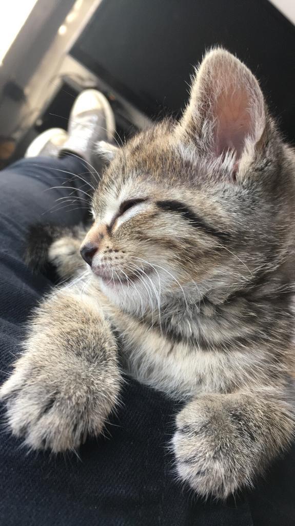 12 week kitten needs a home