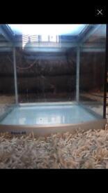 Blue light fish tank