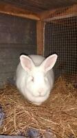 various rabbits for sale!