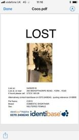 LOST 264 BISHY RD YORK - 8 Month Old Kitten Coco