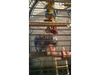 13 Month old African Grey Parrot with cage and toys £600
