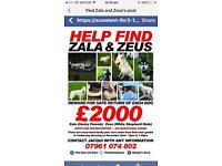 Help find zala and Zeus