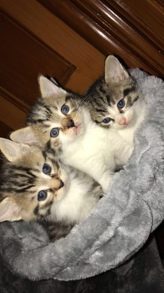 Male kitten for sale!