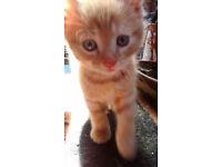 gingery marmaladey kitty