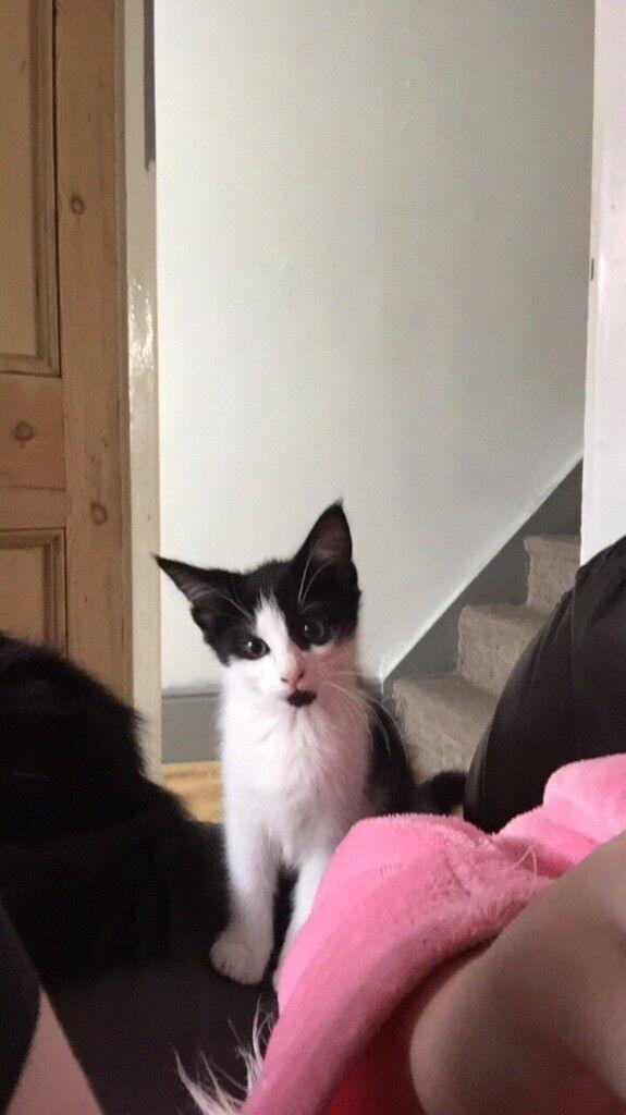 1male kitten