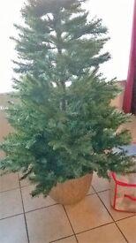 Barton Grange 5ft Christmas tree
