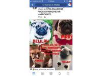 Pugs stolen