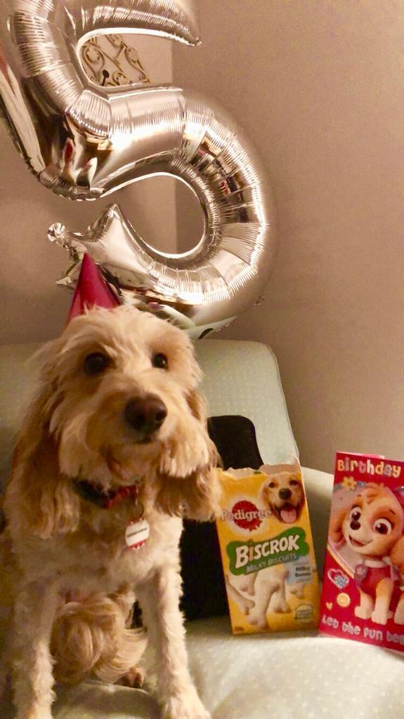 Free 5 balloon | in Houston, Renfrewshire | Gumtree