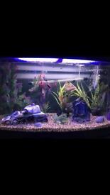 180 ltr fish tank