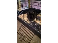rabbit free to good home co.es