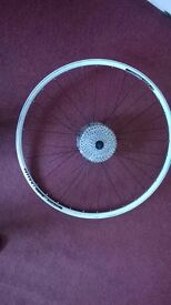 WTB SX19 29-Inch Rear rim white 10-Speed cassette and axle MTB
