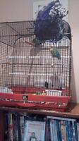 love birds $80 with cage