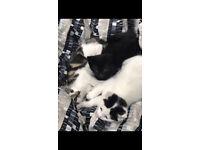 Four Adorable Kittens
