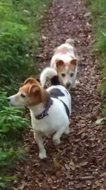 I need a kind person or couple to look after my 2 Jack Russell for 3 months. Can you help?