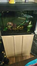 Stunning custom 2ft fish tank set up in excellent condition and quality product £90