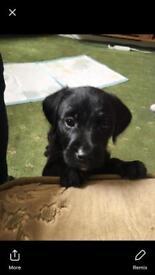 Last pup left
