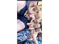 5 beautiful puppies
