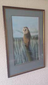 Barn Owl on a post