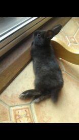 Rabbit for sale