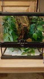 Crested gecko with small setup