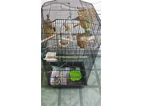 finches with cage