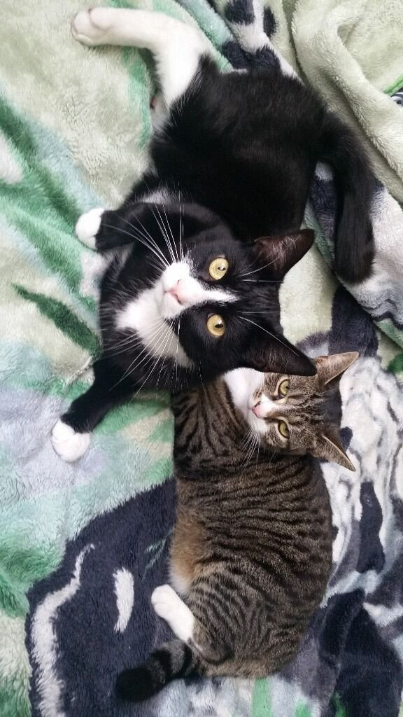 2 cats for a loving home asap