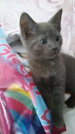 Kittens for sale £20 each