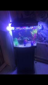 fish tank with fish and lights