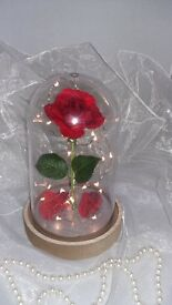 ENCHANTED ROSE IN DOME
