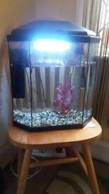 Aqua Rena Aquarium, lights, filter, decorations, temperature controller, selling for £55/best offer