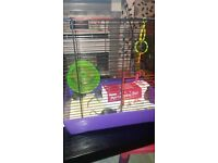 4 male mice with cage and accessories