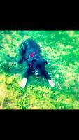 URGENT requiring a Dog foster home $$$