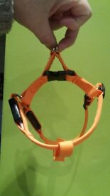 Dog harness. Lights up or flashes.